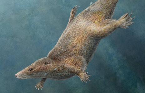 and the small  mouselike early mammals of the Jurassic and CretaceousFirst Mammals On Earth