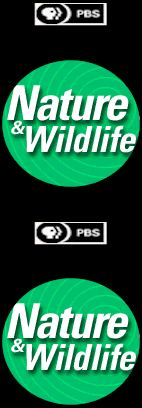Extensive Nature & Wildlife Reports - Creatures, Habitat, Natural Phenomena
